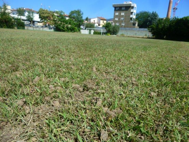phoca_thumb_l_particolare erba naturale